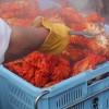 「カニだらけ!カニ美味しいね♪」北海道:根室カニ祭り