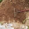 【家庭菜園】こまつな、にんにく、キャベツ、再生ネギ、を育てます。