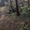 【ツカ狩猟】狩猟解禁したから山に行ったけどなんもとれなかった