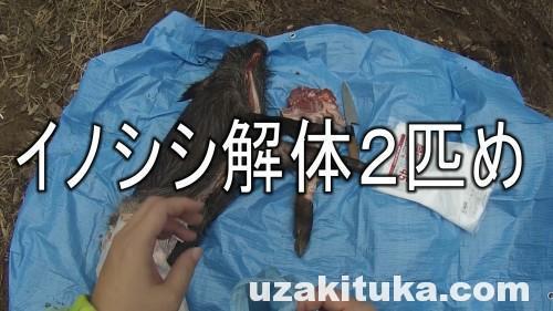 【ツカ狩猟】イノシシをスコップで倒して解体しました