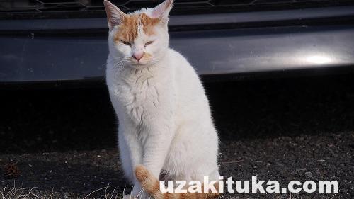 「みかも山」栃木県【観光】八重べにしだれ桜