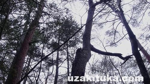 SnapShot(12)