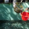 「山奥ニートさん家」和歌山県【観光】アユの稚魚バケツリレー放流