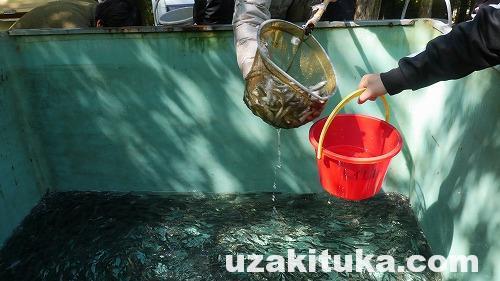 「アユの稚魚バケツリレー放流」和歌山県:山奥ニートさん家