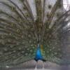 「遊園地?みたいな乗物がある善光寺隣の入園無料動物園」長野県:城山動物園(無料)
