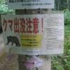 「大平峠県民の森キャンプ場(無料)」長野県【キャンプ】クマ出没注意!霧のたちこむ森の奥!山のミストで夏でも涼しい