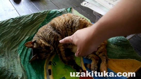 「猫が校長?山奥にたたずむ木造校舎」長野県:旧木沢小学