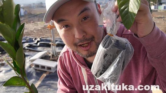 【家庭菜園】びわ・ぽんかん・みかんx4・桃x2・リンゴx2・柿・グレフル・さくらんぼを植える