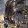 「イノシシ解体」#2宇崎ツカの栃木で狩猟サバイバル