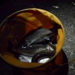 【釣り】東京都_大人気の釣り場!BBQやキャンプも可能!夜景の撮影スポット!【無料】若洲海浜公園【P500】車中泊旅行2017