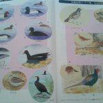 鳥類の判別