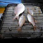 【魚釣り】高知_海の駅あしずりの隣の港_宇崎ツカの釣り旅