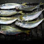 ムーンビーチ井野浦キャンプ場(無料)「アジ釣って食べる!」愛媛県【釣りキャンプ】10月