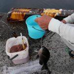 「アジ釣って食べる」愛媛県伊方港【釣り】