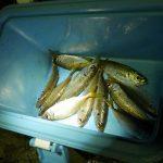 「アジ釣って食べる」兵庫県浦漁港(淡路島)【釣り】