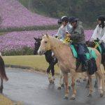「あわじ花さじき」兵庫県淡路島【観光】