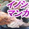 「イノシシマンガ肉」#8山奥の川で自給自足のサバイバル生活