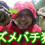 「スズメバチ狩って食べる」#19山奥の川で自給自足サバイバル生活