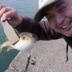 磯崎港で釣り「クサフグ釣れた!」茨城県